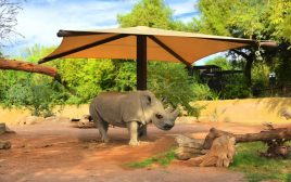 PHX Zoo Rhino 1