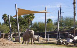 Reid Park Elephant 9